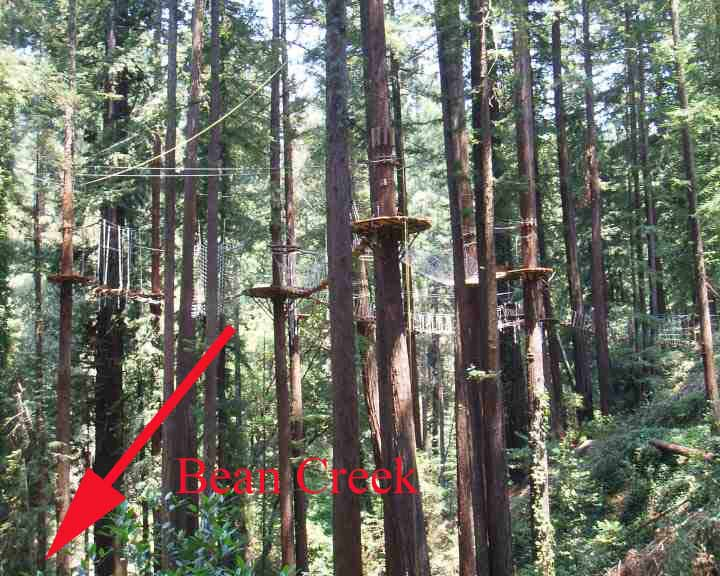 DESECRATED REDWOODS BY MOUNT HERMON